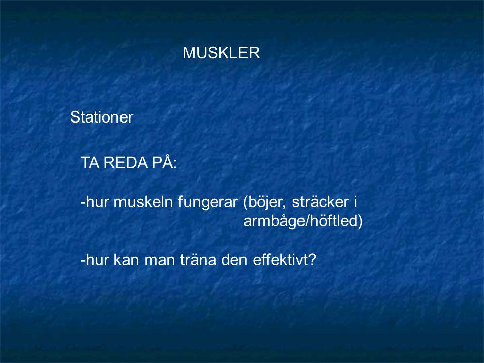 MUSKLER Stationer TA REDA PÅ: -hur muskeln fungerar (böjer, sträcker i armbåge/höftled) -hur kan man träna den effektivt?