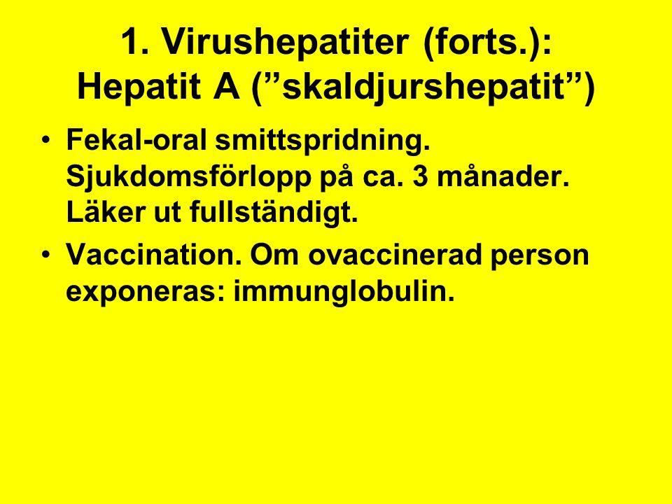 """1. Virushepatiter (forts.): Hepatit A (""""skaldjurshepatit"""") Fekal-oral smittspridning. Sjukdomsförlopp på ca. 3 månader. Läker ut fullständigt. Vaccina"""
