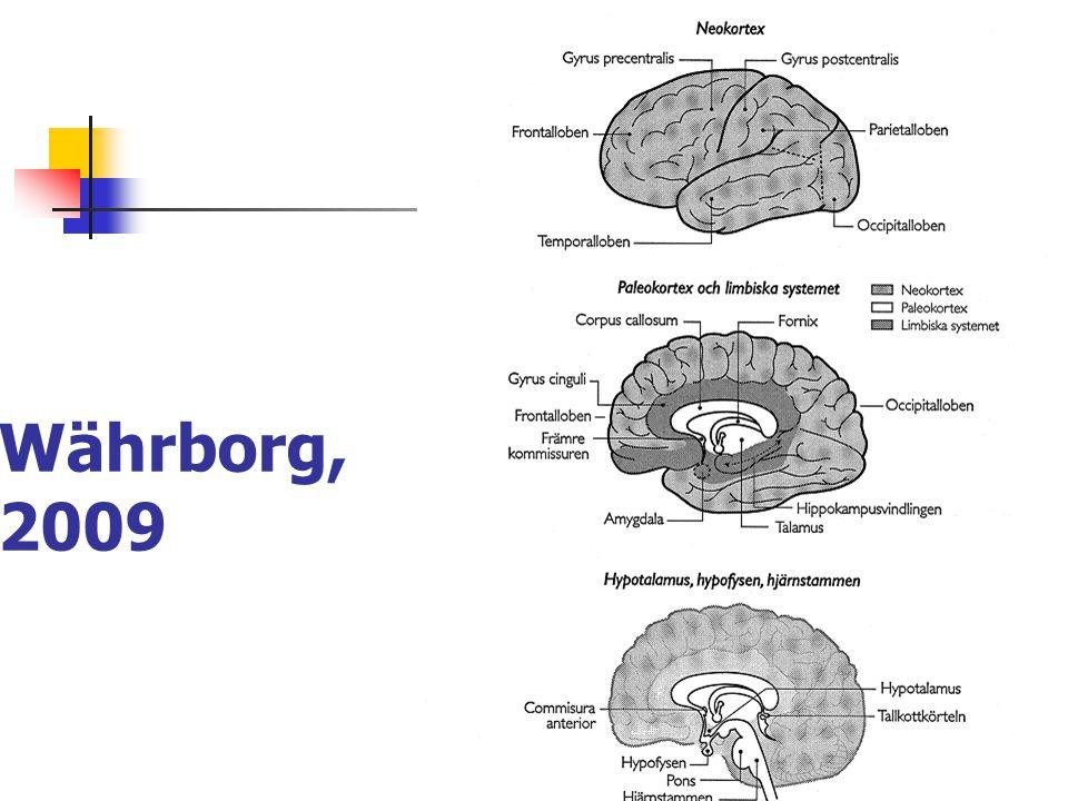 Neokortex - däggdjurshjärnan Varseblivning (perception) av omgivningsstimuli, tolkning av dessa.