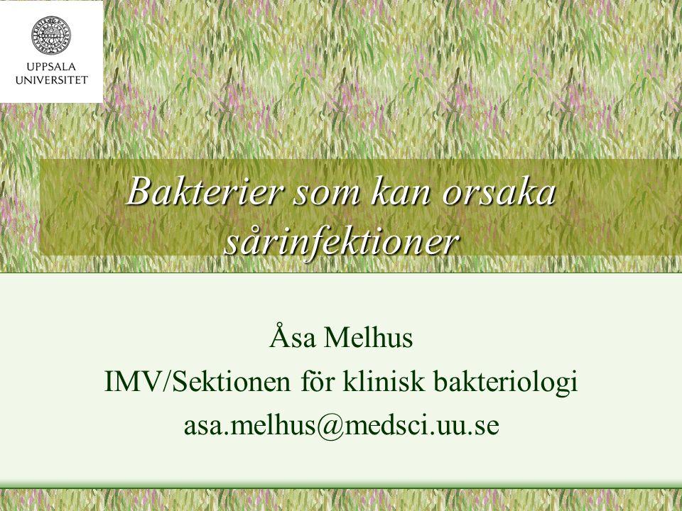 Bakterier som kan orsaka sårinfektioner Åsa Melhus IMV/Sektionen för klinisk bakteriologi asa.melhus@medsci.uu.se