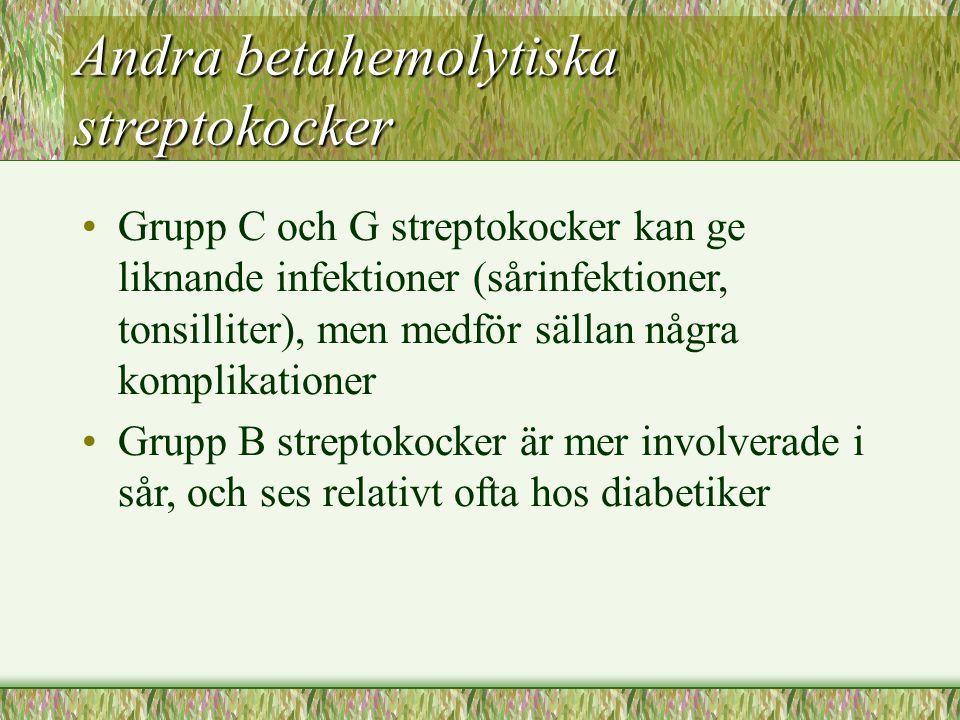 Andra betahemolytiska streptokocker Grupp C och G streptokocker kan ge liknande infektioner (sårinfektioner, tonsilliter), men medför sällan några kom