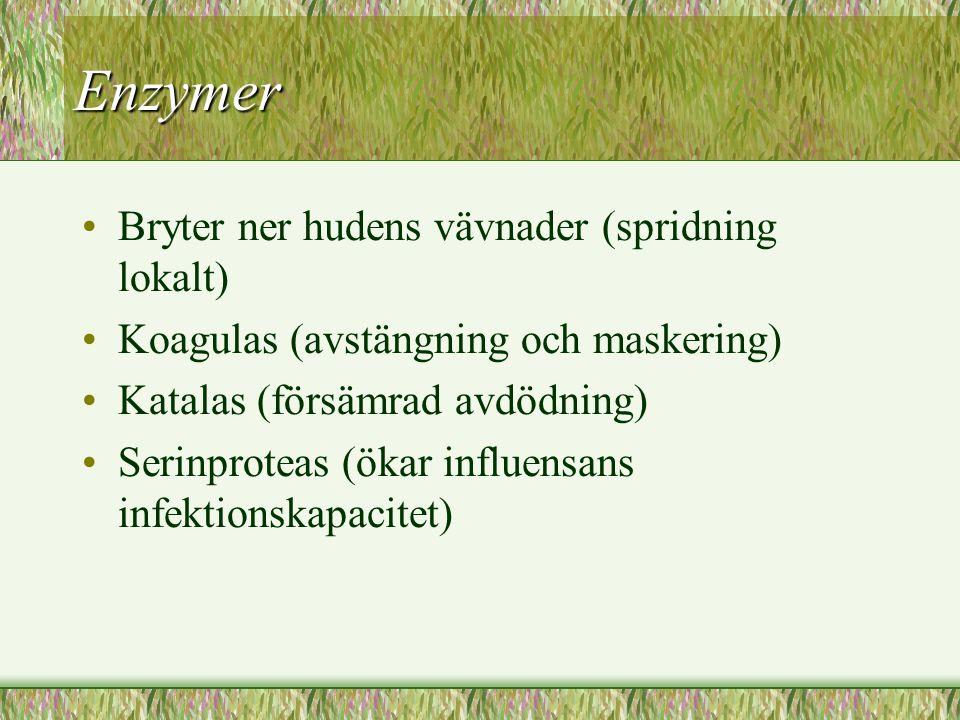 Enzymer Bryter ner hudens vävnader (spridning lokalt) Koagulas (avstängning och maskering) Katalas (försämrad avdödning) Serinproteas (ökar influensan