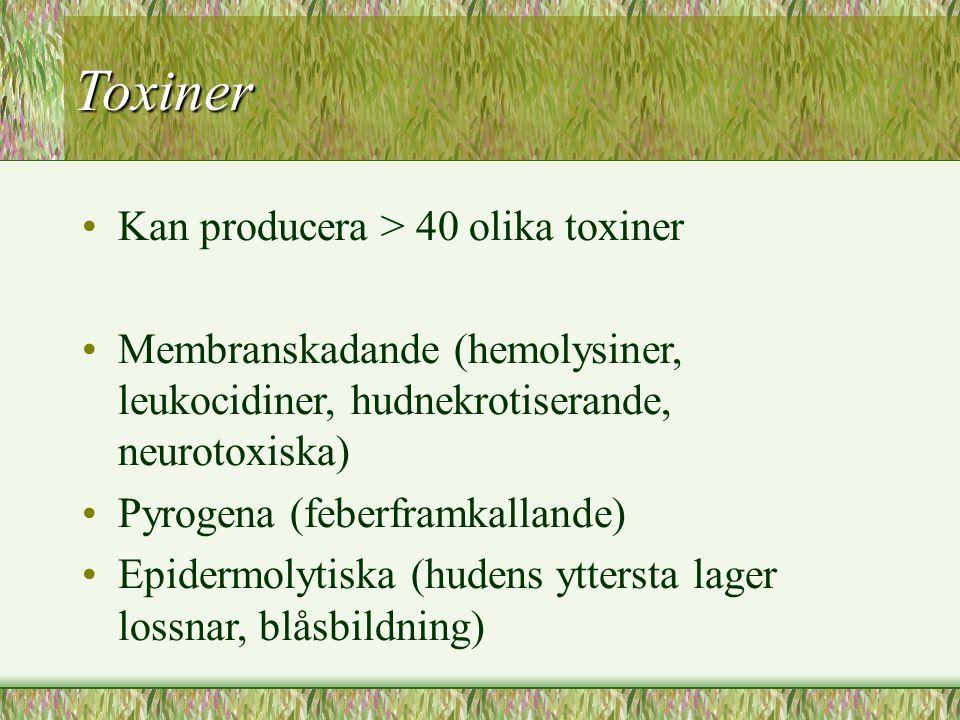 Toxiner Kan producera > 40 olika toxiner Membranskadande (hemolysiner, leukocidiner, hudnekrotiserande, neurotoxiska) Pyrogena (feberframkallande) Epi