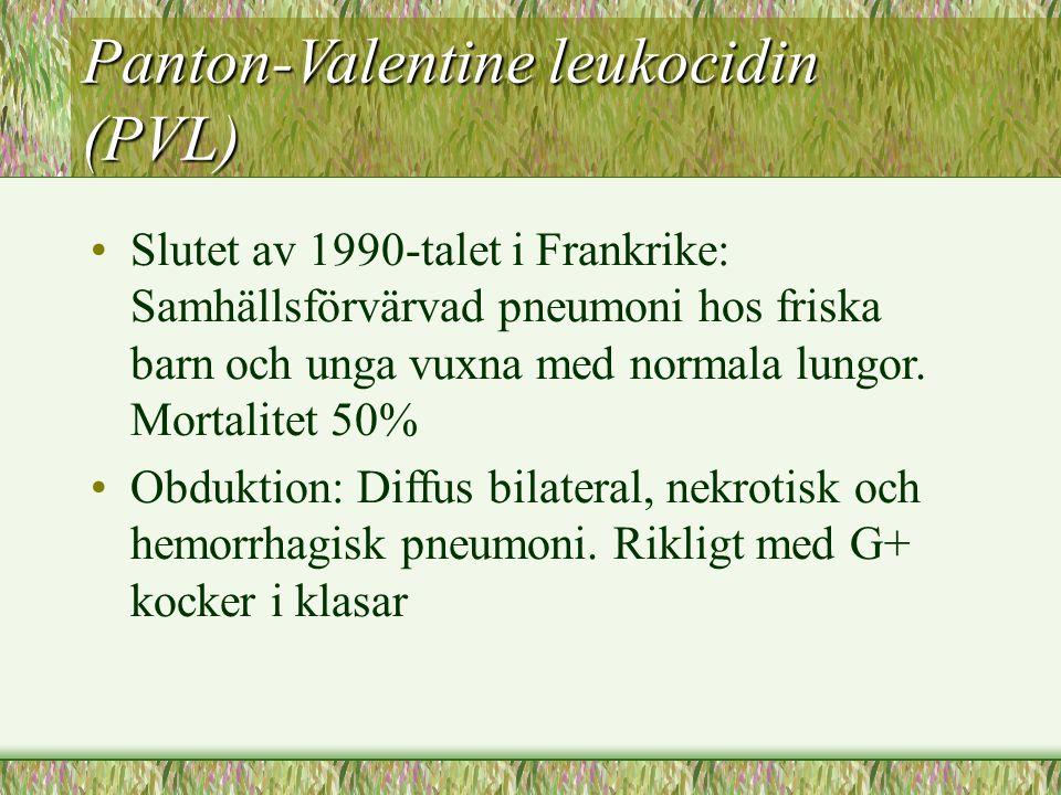 Panton-Valentine leukocidin (PVL) Slutet av 1990-talet i Frankrike: Samhällsförvärvad pneumoni hos friska barn och unga vuxna med normala lungor. Mort