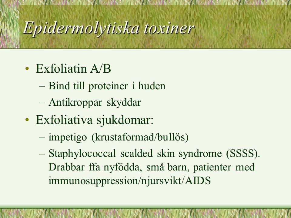 Epidermolytiska toxiner Exfoliatin A/B –Bind till proteiner i huden –Antikroppar skyddar Exfoliativa sjukdomar: –impetigo (krustaformad/bullös) –Staph