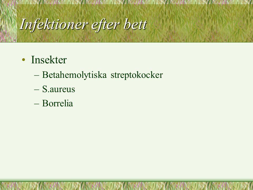Infektioner efter bett Insekter –Betahemolytiska streptokocker –S.aureus –Borrelia