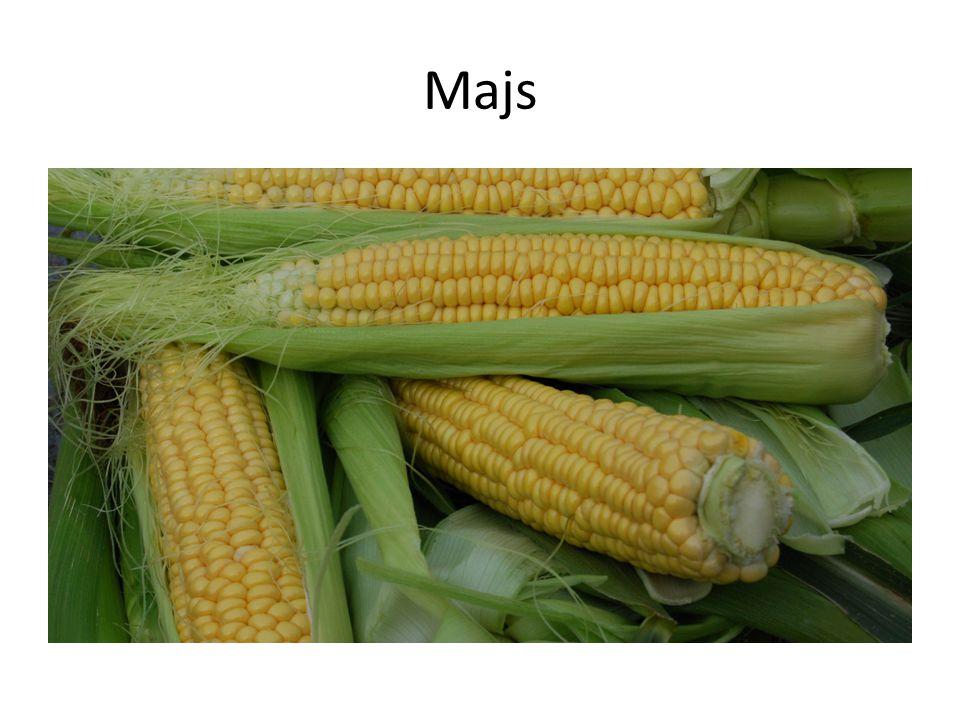 Majsens historia Majs odlas i olika ställen i världen på ett majsfält.