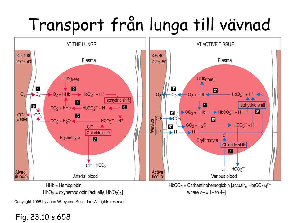 Transport från lunga till vävnad Fig. 23.10 s.658