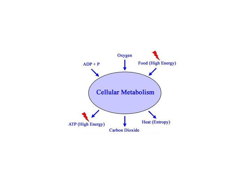 Kataboliska cellprocesser