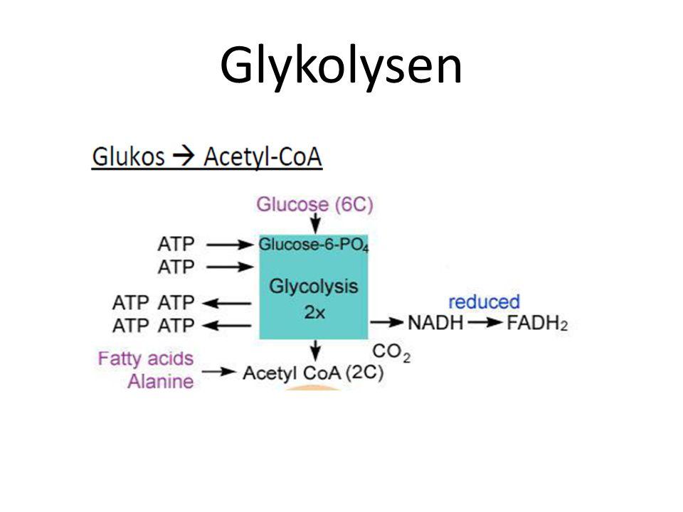 Glykolysen