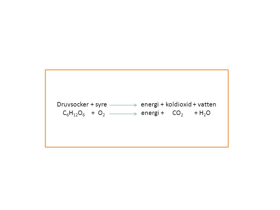Druvsocker + syreenergi + koldioxid + vatten C 6 H 12 O 6 + O 2 energi + CO 2 + H 2 O