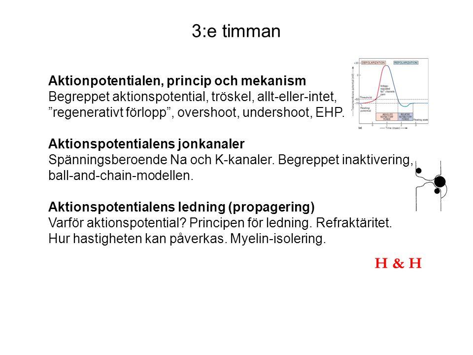 3:e timman Aktionpotentialen, princip och mekanism Begreppet aktionspotential, tröskel, allt-eller-intet, regenerativt förlopp , overshoot, undershoot, EHP.