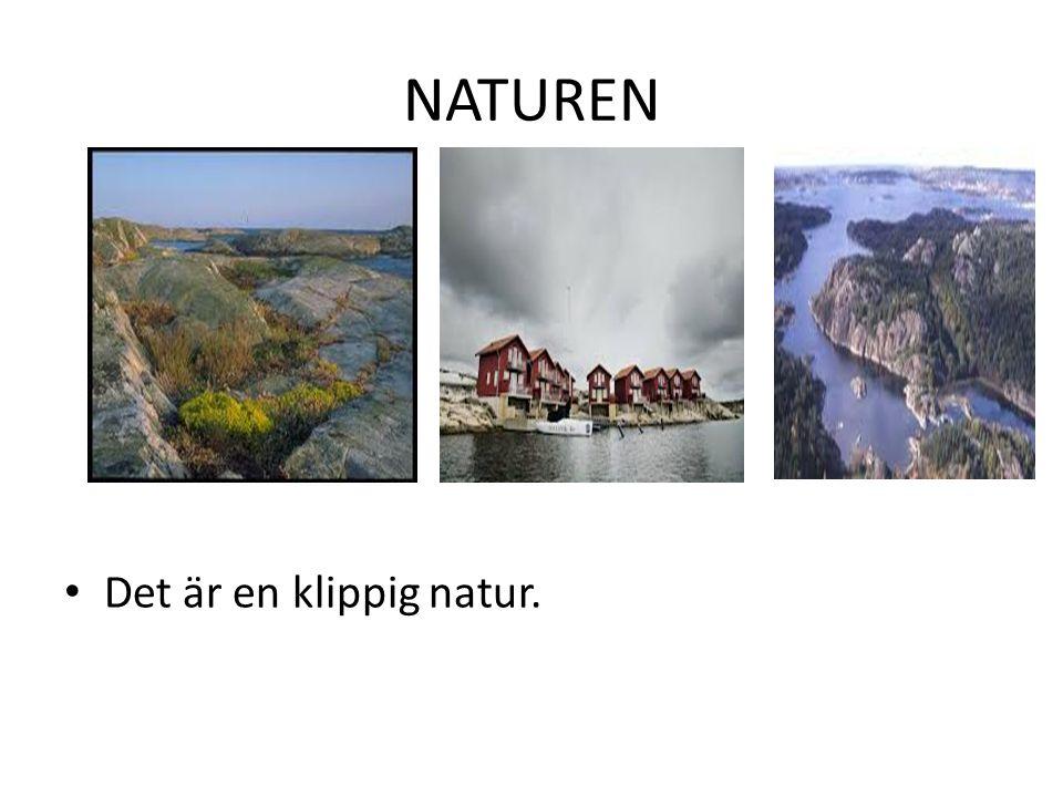 NATUREN Det är en klippig natur.