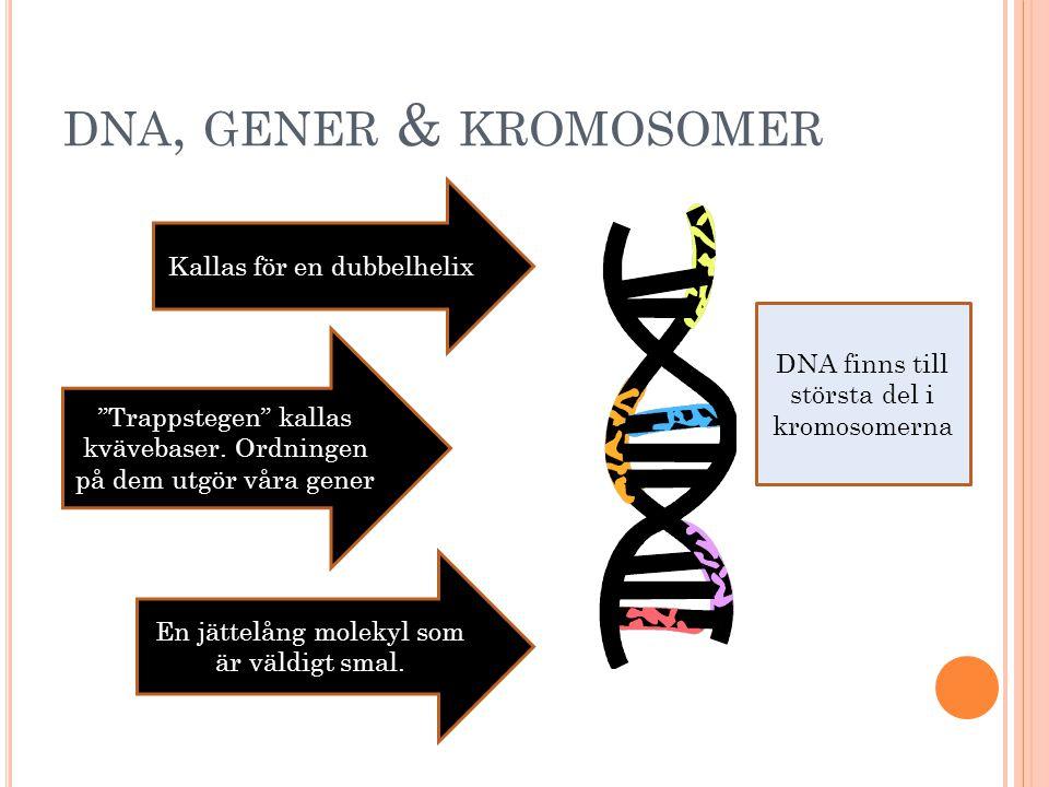 B EGREPP INOM GENETIKEN DNA Gener Kromosomer Mitos – Vanlig celldelning Meios – Reduktionsdelning Mutationer Korsningsschema