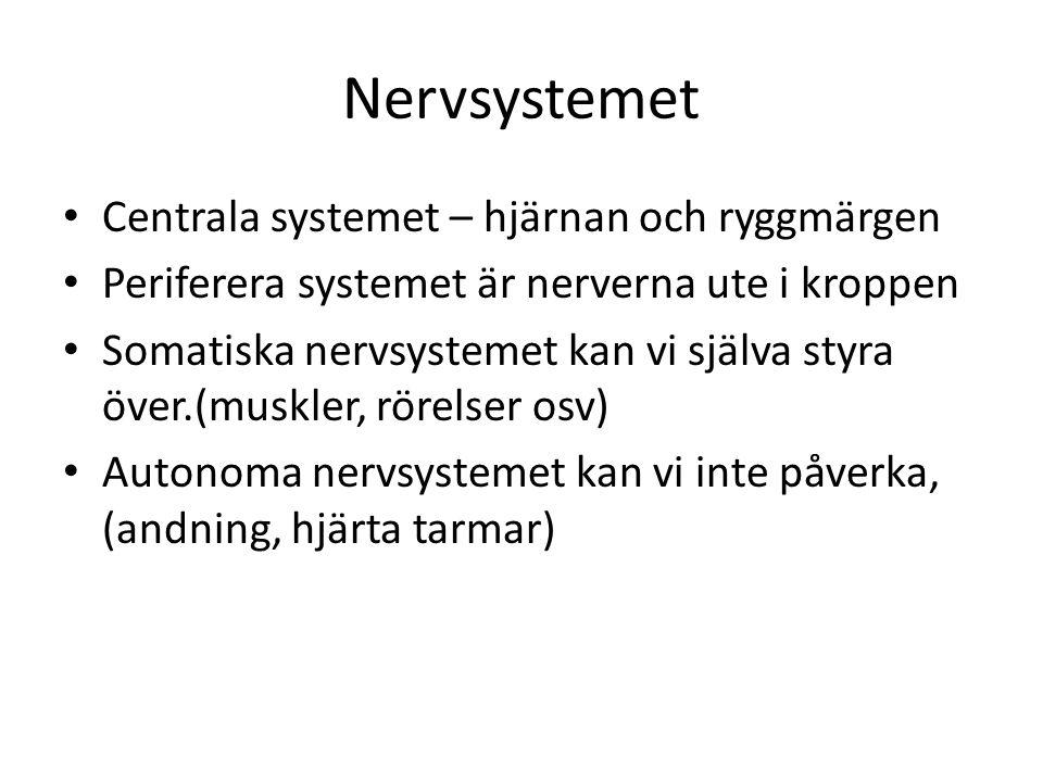 Nervsystemet Centrala systemet – hjärnan och ryggmärgen Periferera systemet är nerverna ute i kroppen Somatiska nervsystemet kan vi själva styra över.(muskler, rörelser osv) Autonoma nervsystemet kan vi inte påverka, (andning, hjärta tarmar)