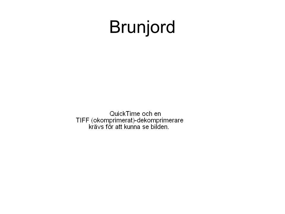 Brunjord