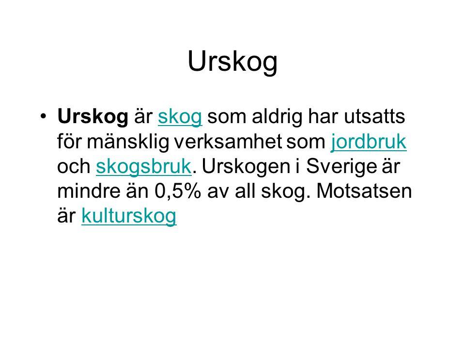 Urskog Urskog är skog som aldrig har utsatts för mänsklig verksamhet som jordbruk och skogsbruk. Urskogen i Sverige är mindre än 0,5% av all skog. Mot