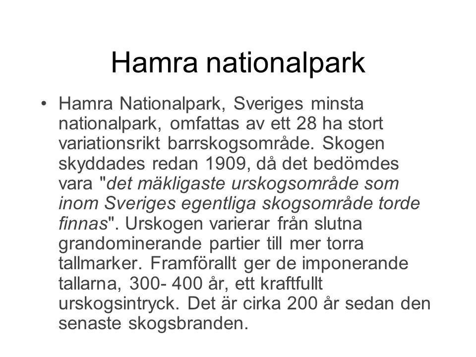 Hamra nationalpark Hamra Nationalpark, Sveriges minsta nationalpark, omfattas av ett 28 ha stort variationsrikt barrskogsområde. Skogen skyddades reda