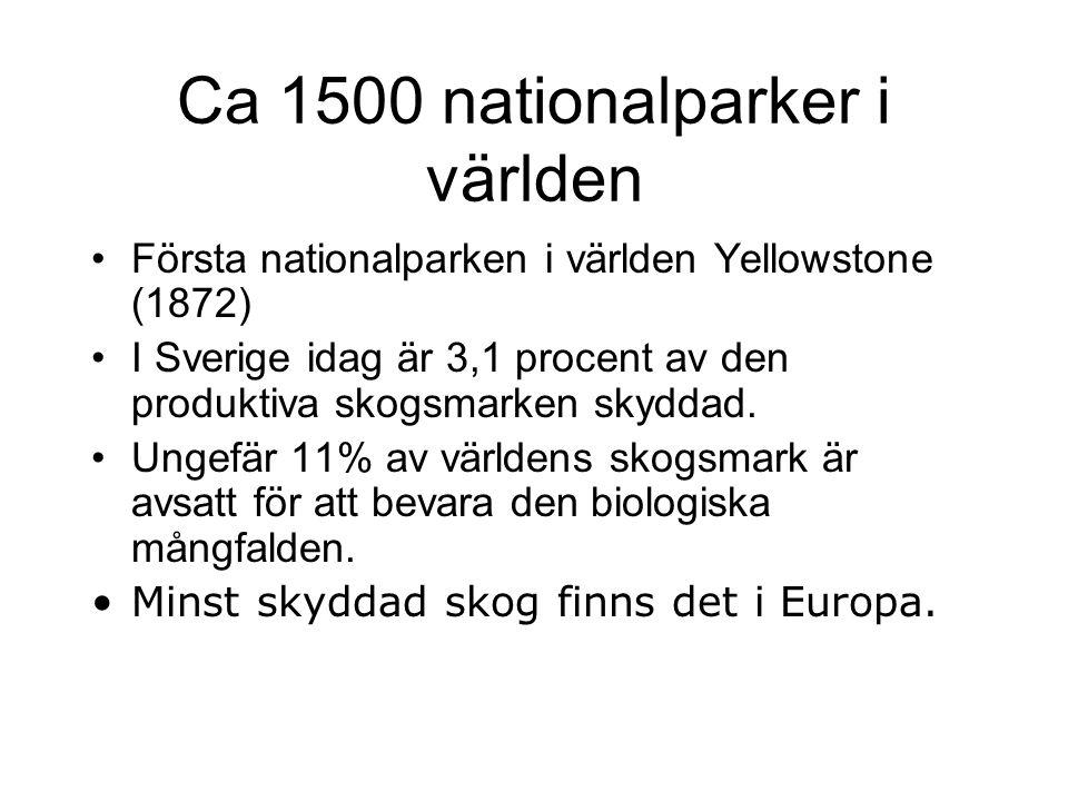 Ca 1500 nationalparker i världen Första nationalparken i världen Yellowstone (1872) I Sverige idag är 3,1 procent av den produktiva skogsmarken skydda