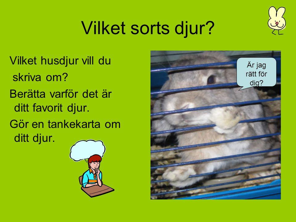 Skötselråd Hur sköter du ditt djur på bästa sätt? Små kaniner behöver skutta och mycket kärlek.