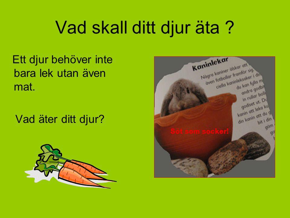 Vad skall ditt djur äta ? Ett djur behöver inte bara lek utan även mat. Vad äter ditt djur?