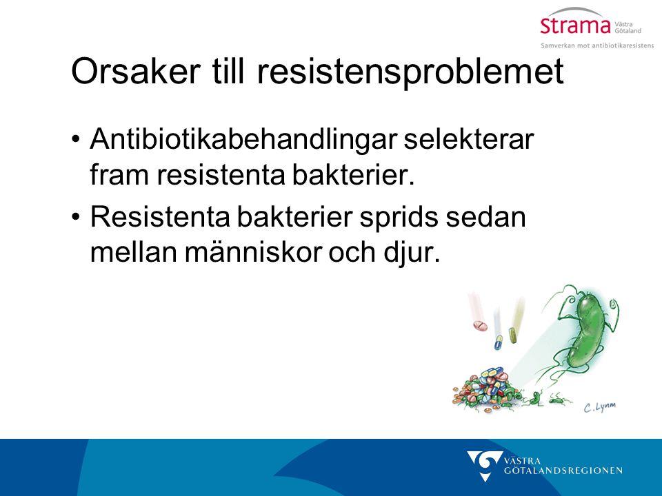 Orsaker till resistensproblemet Antibiotikabehandlingar selekterar fram resistenta bakterier. Resistenta bakterier sprids sedan mellan människor och d