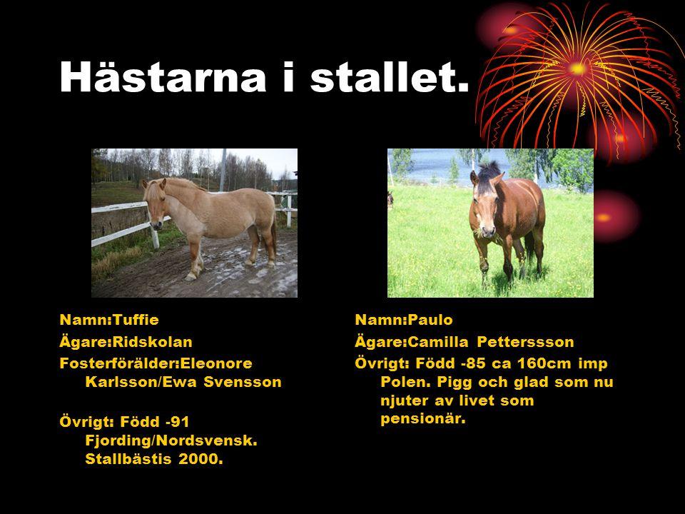 Hästarna i stallet. Namn:Tuffie Ägare:Ridskolan Fosterförälder:Eleonore Karlsson/Ewa Svensson Övrigt: Född -91 Fjording/Nordsvensk. Stallbästis 2000.