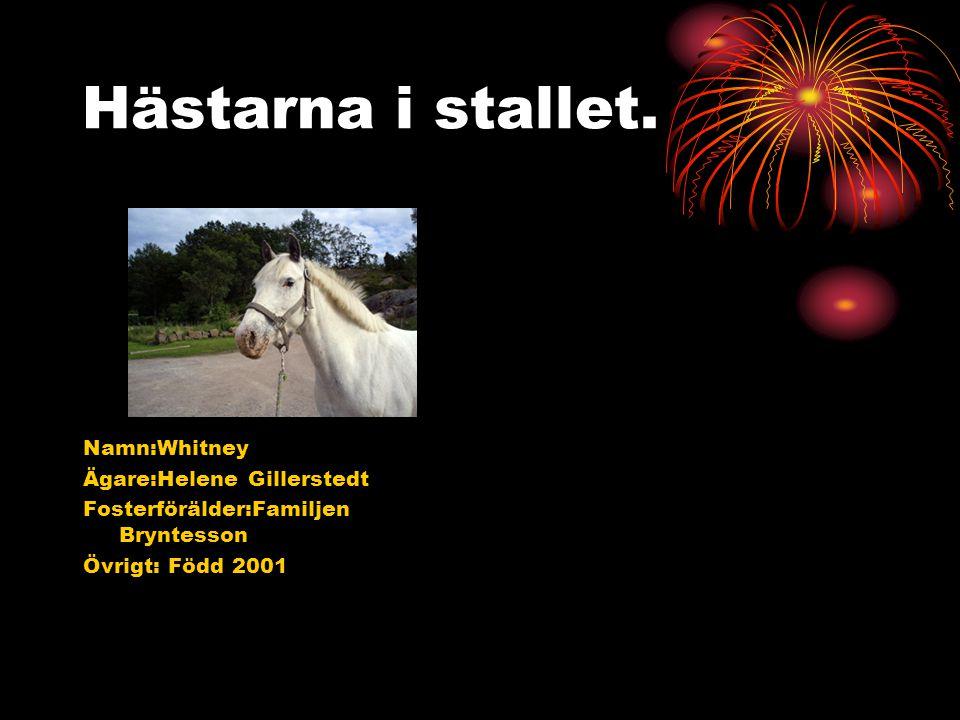 Hästarna i stallet. Namn:Whitney Ägare:Helene Gillerstedt Fosterförälder:Familjen Bryntesson Övrigt: Född 2001