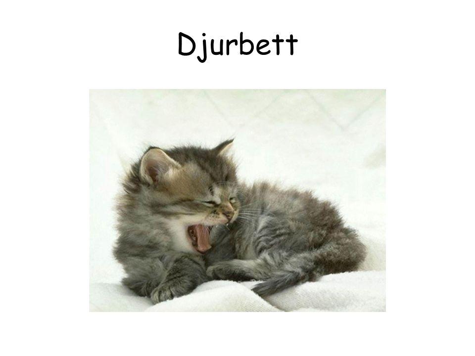 Djurbett