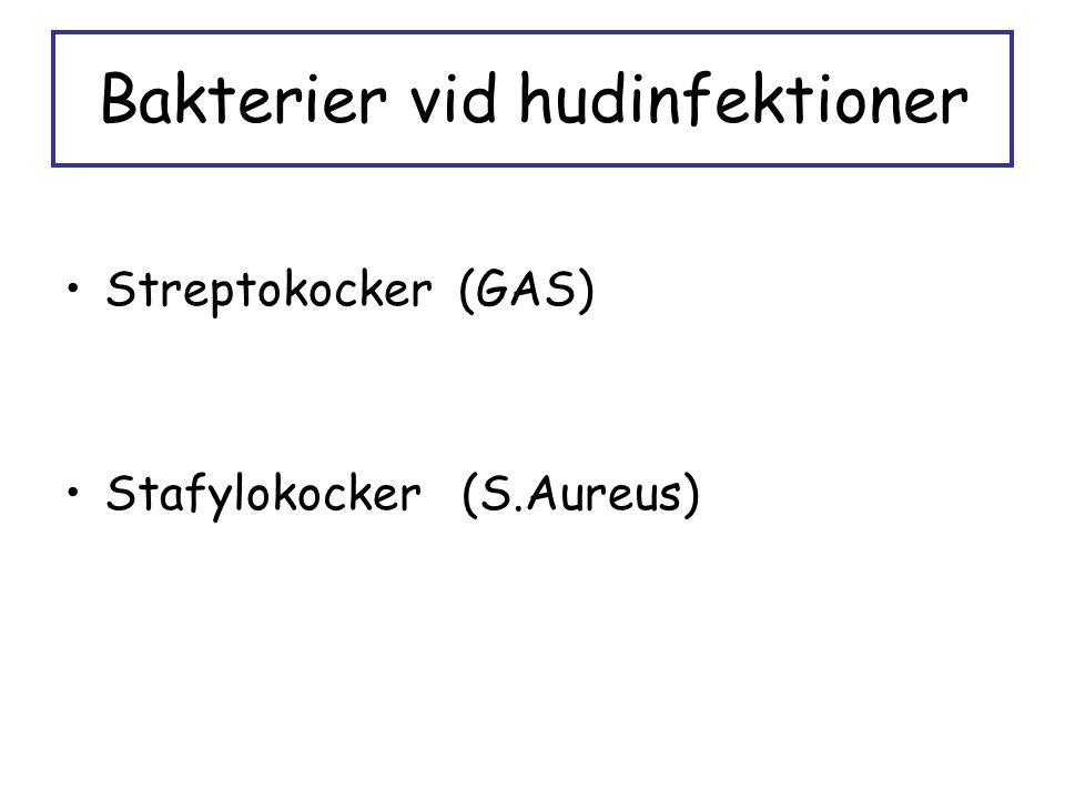 Bakterier vid hudinfektioner Streptokocker (GAS) Stafylokocker (S.Aureus)