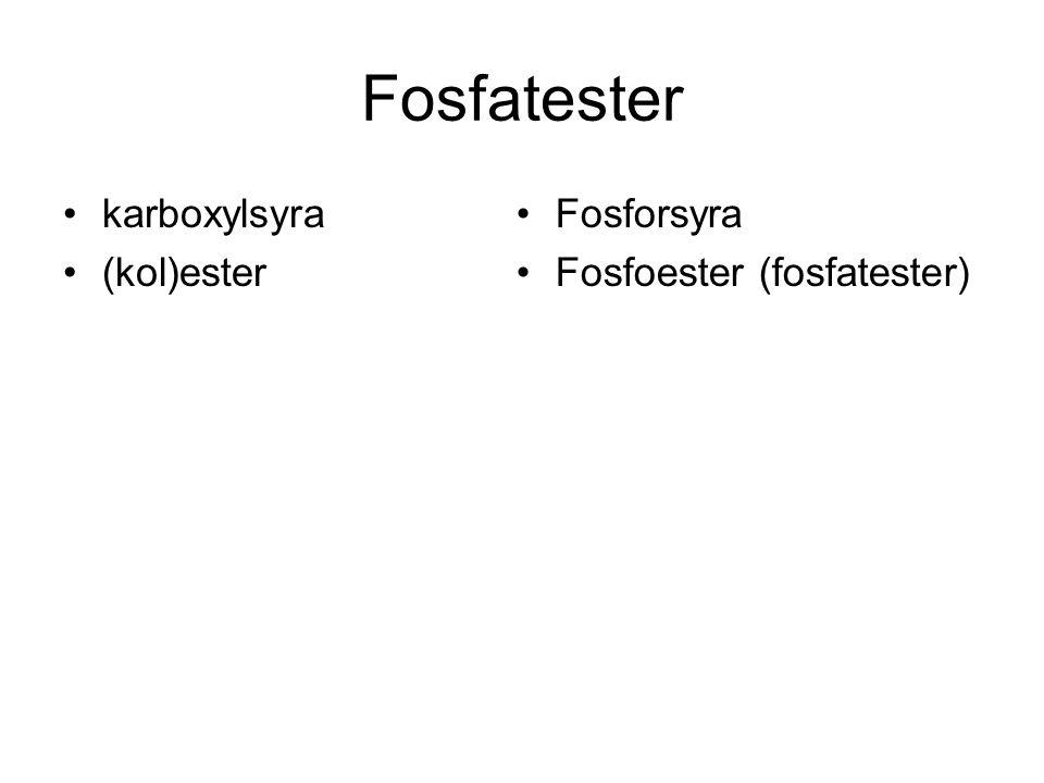 Fosfatester karboxylsyra (kol)ester Fosforsyra Fosfoester (fosfatester)