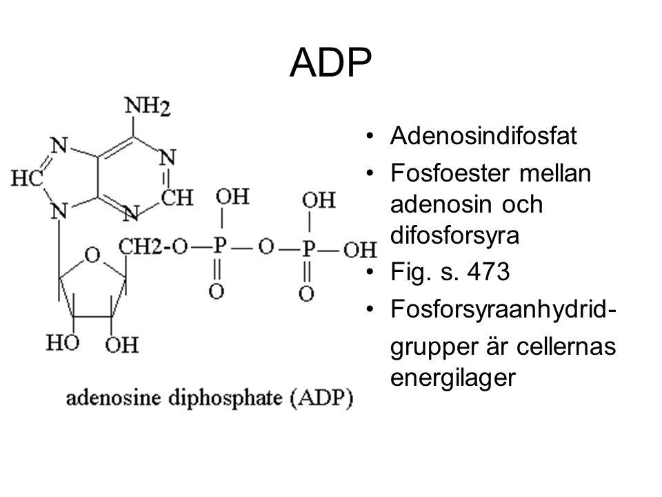 ADP Adenosindifosfat Fosfoester mellan adenosin och difosforsyra Fig. s. 473 Fosforsyraanhydrid- grupper är cellernas energilager