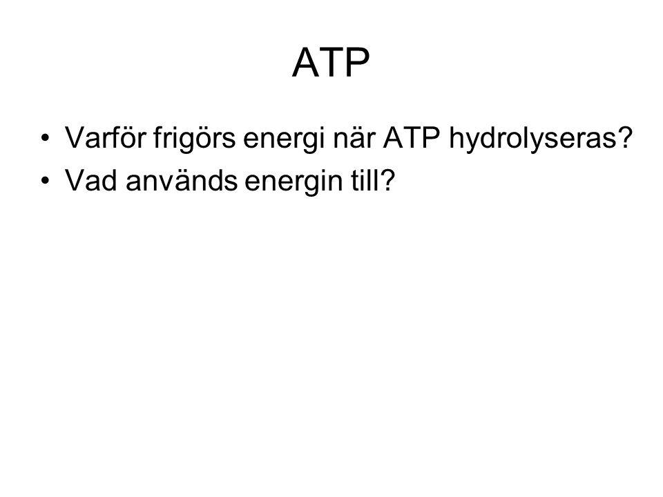 ATP Varför frigörs energi när ATP hydrolyseras? Vad används energin till?