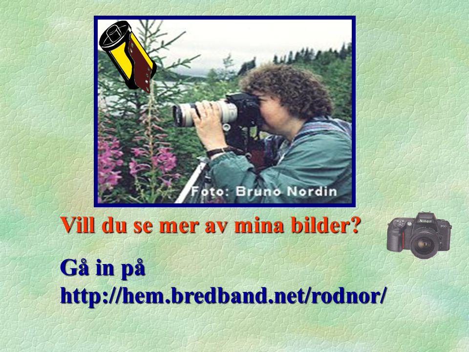 Vill du se mer av mina bilder? Gå in på http://hem.bredband.net/rodnor/