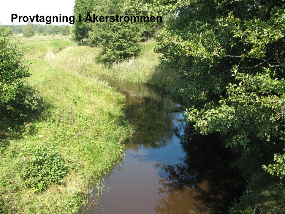 Miljöövervakning- Vårt uppdrag  Att följa storskaliga trender i miljön, positiva och negativa  Att följa upp effekten av nationella och regionala miljöåtgärder  Att med egna och andras undersökningar fastställa ekologisk och kemisk status i länets vattenförekomster Samt  Att använda insamlade underlag för samhällsplanering, naturvärdesbeskrivningar mm  Föreslå åtgärder som förbättrar miljötillståndet  Medverka till att utforma olika åtgärdsstrategier och planeringsunderlag