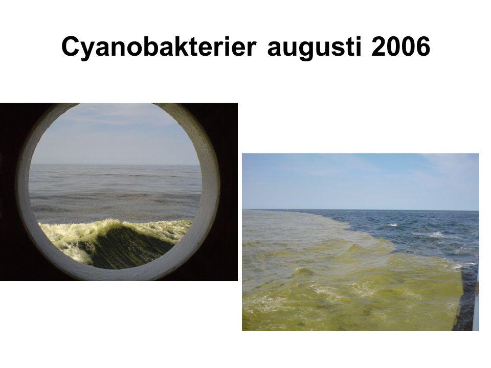 Cyanobakterier augusti 2006