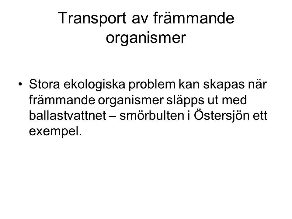 Transport av främmande organismer Stora ekologiska problem kan skapas när främmande organismer släpps ut med ballastvattnet – smörbulten i Östersjön ett exempel.