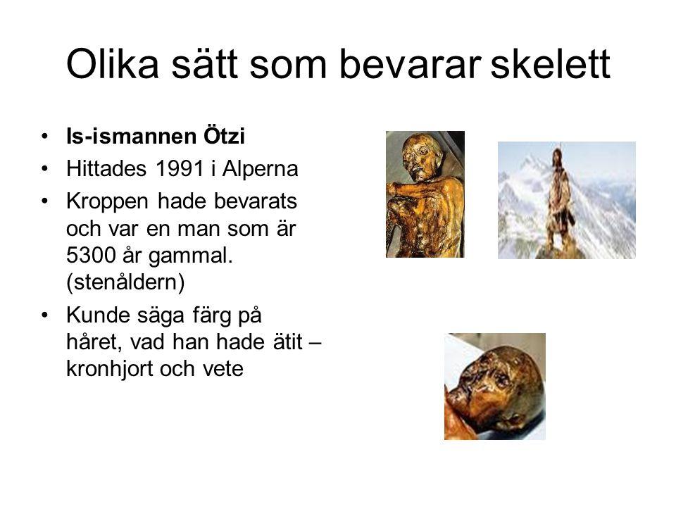 Olika sätt som bevarar skelett Is-ismannen Ötzi Hittades 1991 i Alperna Kroppen hade bevarats och var en man som är 5300 år gammal.