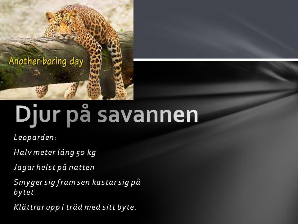 Leoparden: Halv meter lång 50 kg Jagar helst på natten Smyger sig fram sen kastar sig på bytet Klättrar upp i träd med sitt byte.