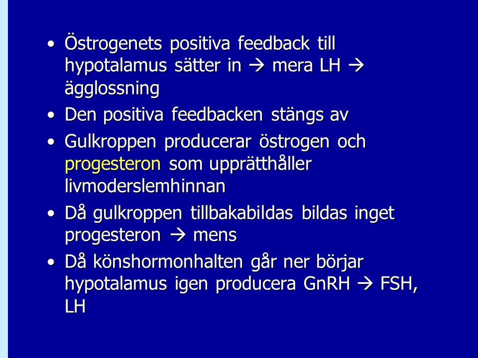 Östrogenets positiva feedback till hypotalamus sätter in  mera LH  ägglossningÖstrogenets positiva feedback till hypotalamus sätter in  mera LH  ä