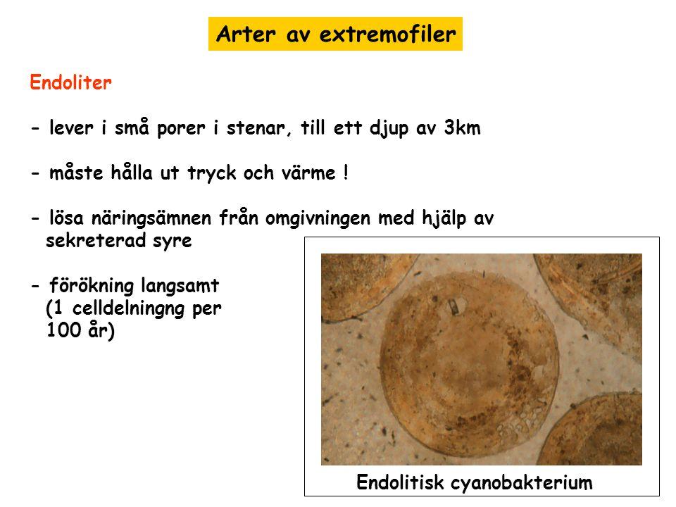 Arter av extremofiler Endoliter - lever i små porer i stenar, till ett djup av 3km - måste hålla ut tryck och värme ! - lösa näringsämnen från omgivni