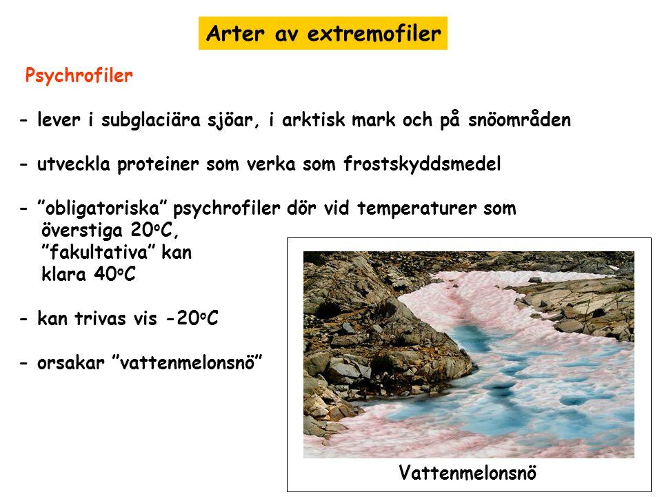 Arter av extremofiler Psychrofiler - lever i subglaciära sjöar, i arktisk mark och på snöområden - utveckla proteiner som verka som frostskyddsmedel -