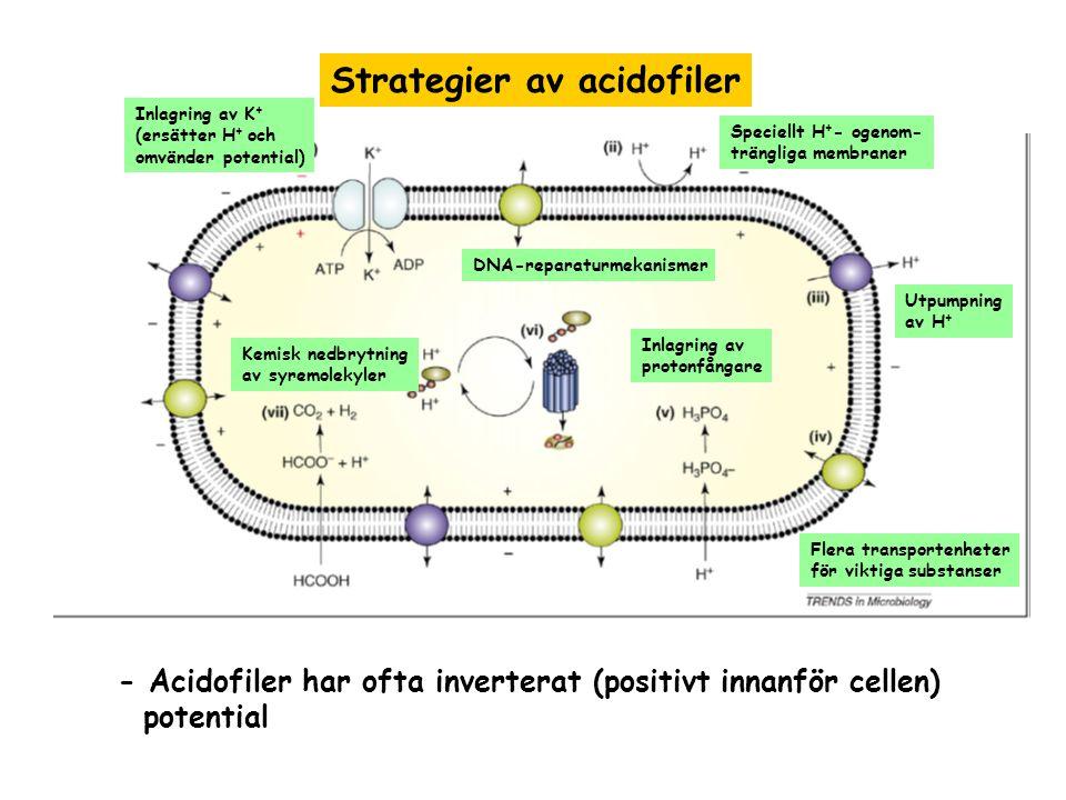 Strategier av acidofiler Kemisk nedbrytning av syremolekyler Inlagring av protonfångare Speciellt H + - ogenom- trängliga membraner Flera transportenh