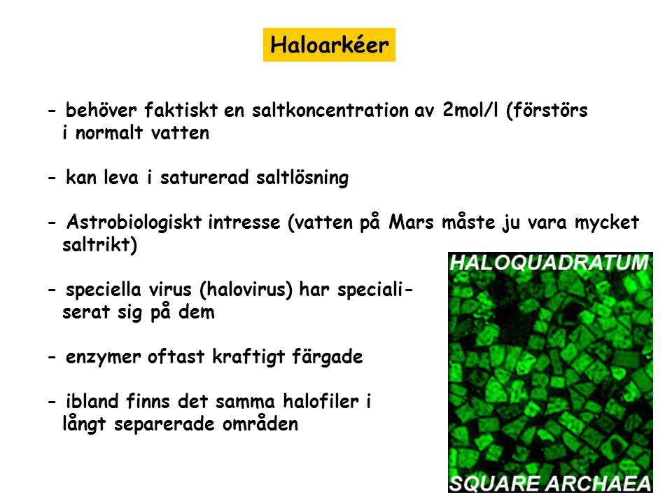 Haloarkéer - behöver faktiskt en saltkoncentration av 2mol/l (förstörs i normalt vatten - kan leva i saturerad saltlösning - Astrobiologiskt intresse