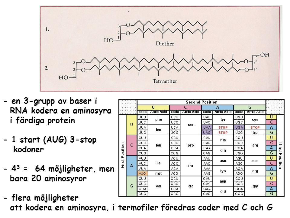 - en 3-grupp av baser i RNA kodera en aminosyra i färdiga protein - 1 start (AUG) 3-stop kodoner - 4 3 = 64 möjligheter, men bara 20 aminosyror - fler