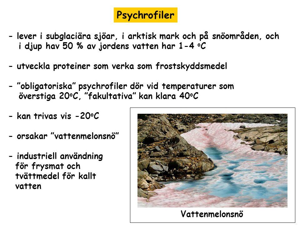 Psychrofiler - lever i subglaciära sjöar, i arktisk mark och på snöområden, och i djup hav 50 % av jordens vatten har 1-4 o C - utveckla proteiner som