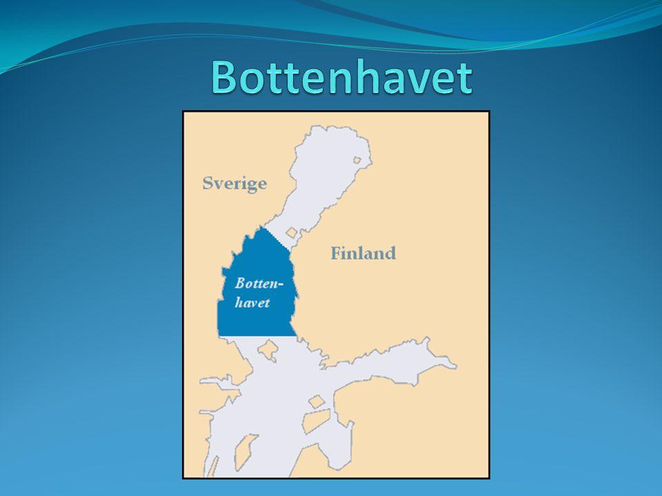 Fakta om botten havet Bottenhavet kallas den del av Bottniska viken som ligger söder om Norra Kvarken och norr om Åland.