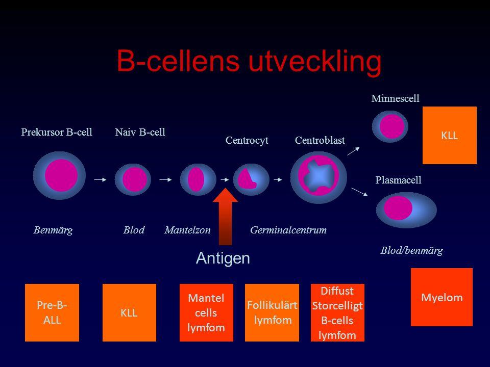 B-cellens utveckling Benmärg BlodMantelzonGerminalcentrum Blod/benmärg Prekursor B-cellNaiv B-cell CentrocytCentroblast Plasmacell Minnescell Antigen