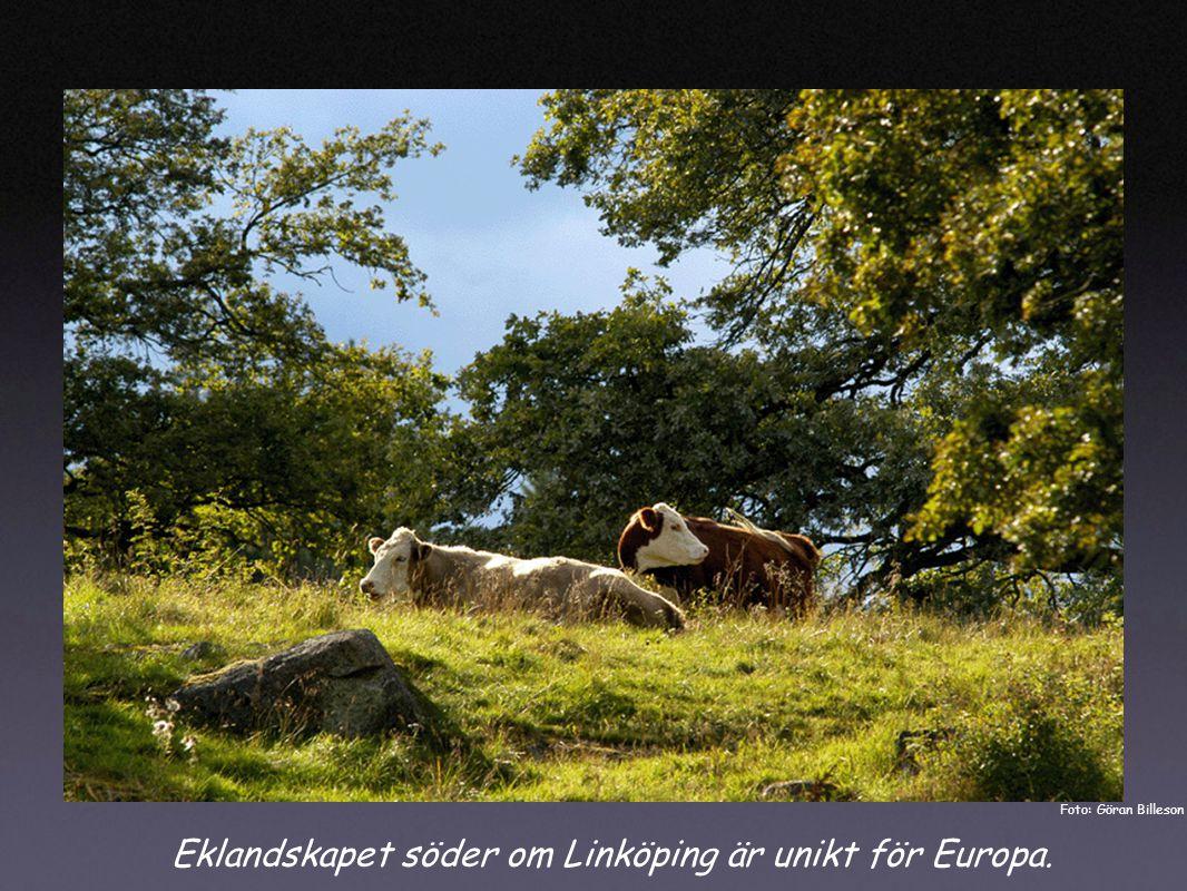 Eklandskapet söder om Linköping är unikt för Europa. Foto: Göran Billeson