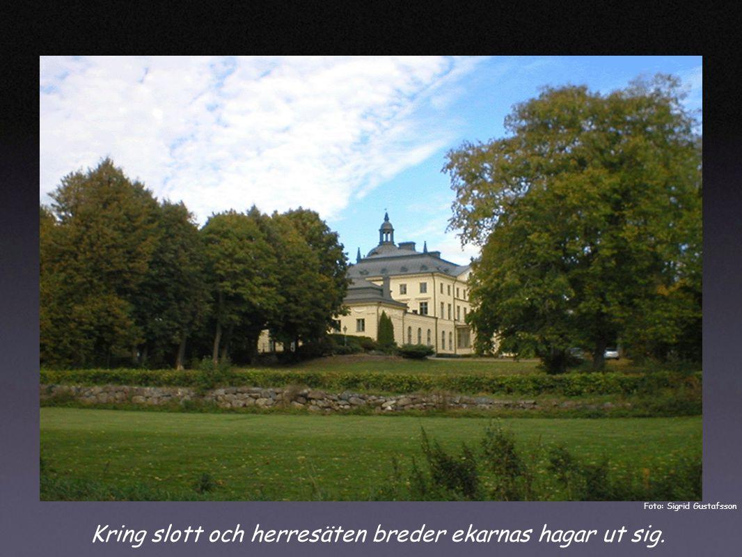 Kring slott och herresäten breder ekarnas hagar ut sig. Foto: Sigrid Gustafsson